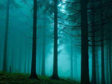 bosque-niebla-elacca-dune